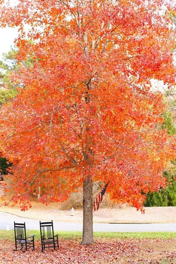 Autumn Fall Leaves in Georgia