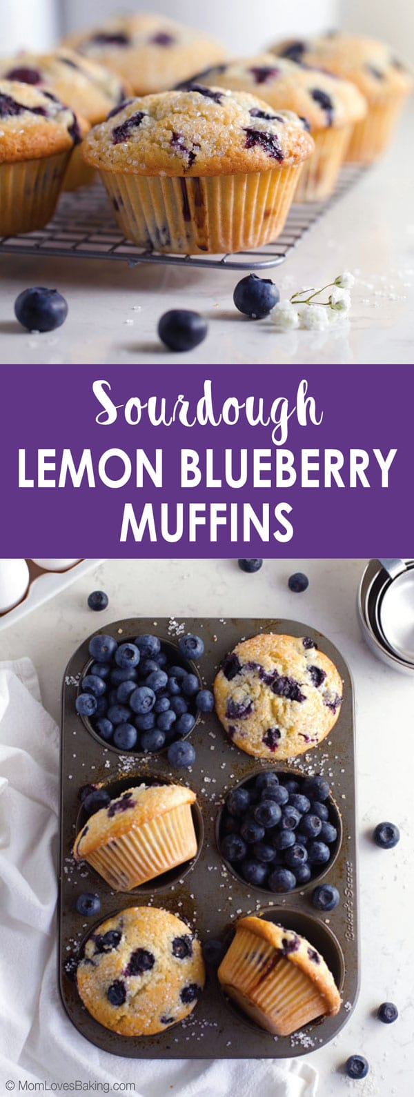 Sourdough Lemon Blueberry Muffins in muffin pan
