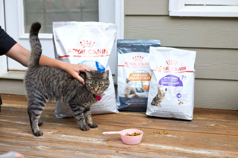 Royal canin cat food National take your cat to vet