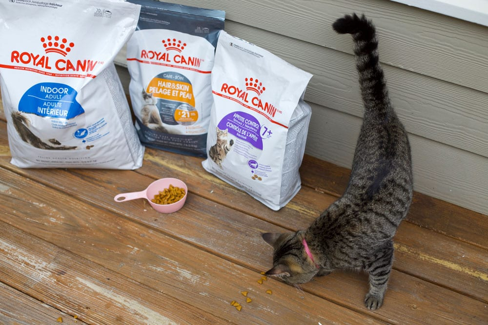 Royal canin food for kitty cats